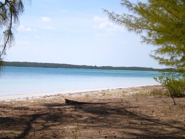 Half Sound Beach